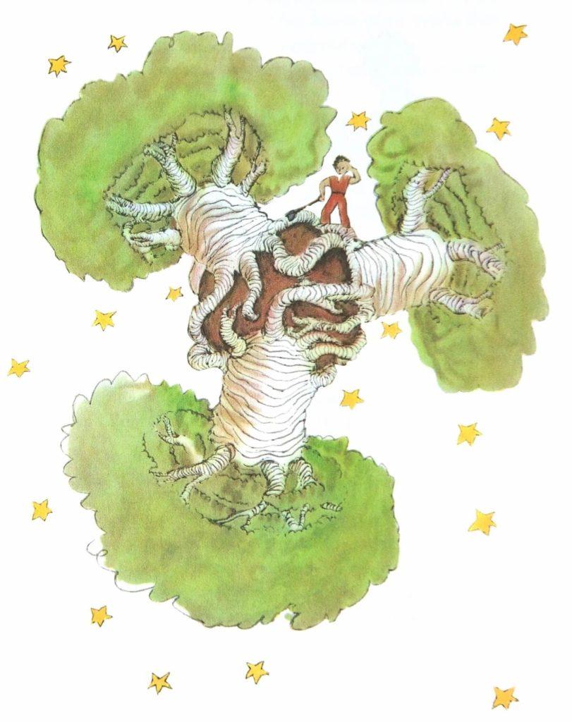 baobab tree 1001